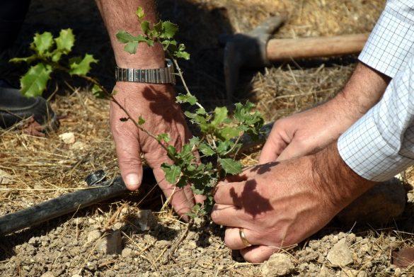 El embajador de Venezuela en Israel plantó un árbol junto al KKL en Jerusalem
